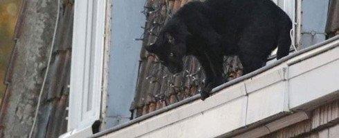 Il y a un an, le 18 septembre 2019 une panthère se balader sur les toits d'Armentières